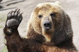 bear wave